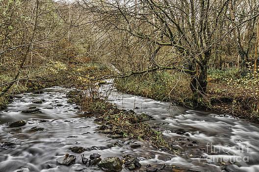 Steve Purnell - Bubbling Water