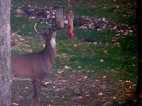 Buck Checking Out Birdseed by Lila Mattison