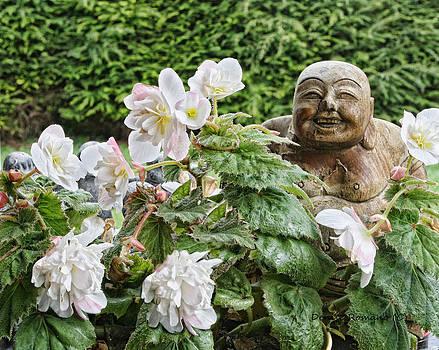 Budda and Begonias by Denise Romano