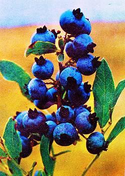 Anne-Elizabeth Whiteway - Blueberries Bright