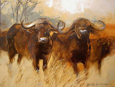 Buffalo by Alida Bothma