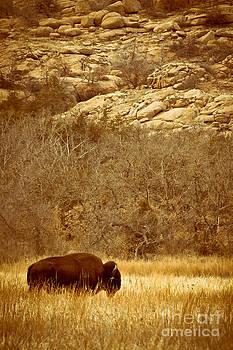 Buffalo And Rocks by Robert Frederick