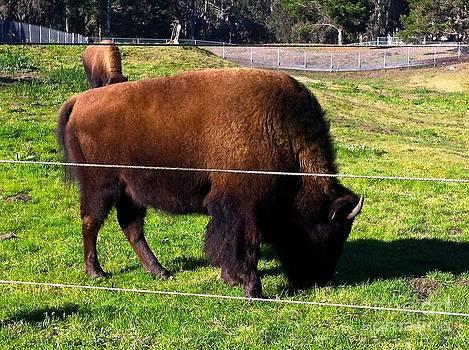 Buffalo Bills Xmas by Sherri Durrell
