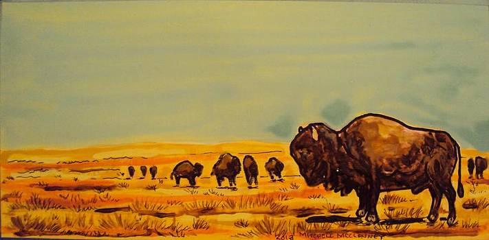 Buffalo Souljourners by Mitchell McClenney