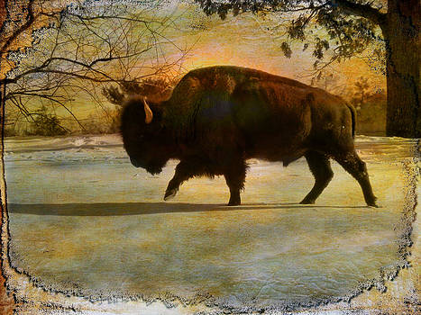 Pamela Phelps - Buffalo-Textured Image