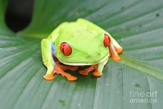 Li Newton - Bug Eyed Beauty