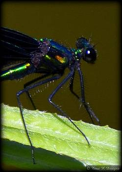 Bug Eyed by Terri K Designs