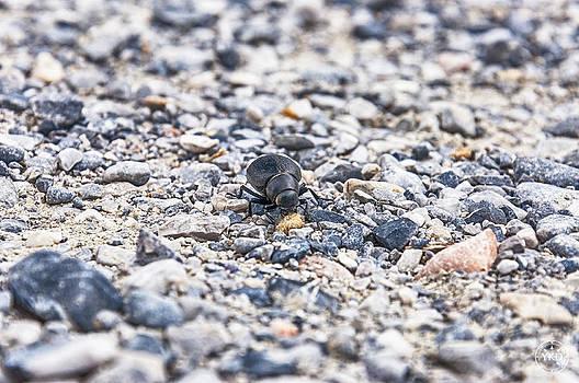 Bug by Yevgeni Kacnelson