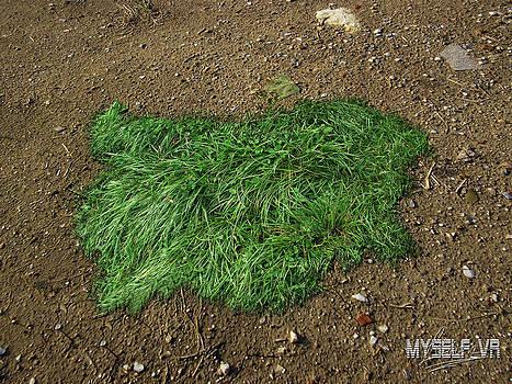 Bulgaria Grass  by Iliyan Stoychev