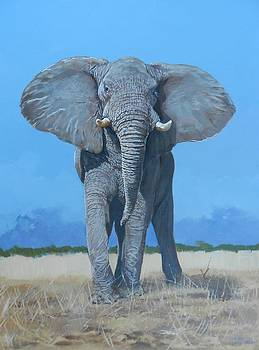 Bull Elephant by Robert Teeling