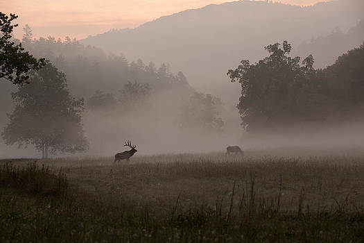 Cataloochee Valley by Doug McPherson