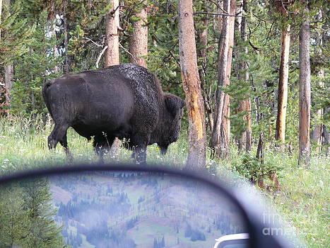 Bull by Jeff Pickett