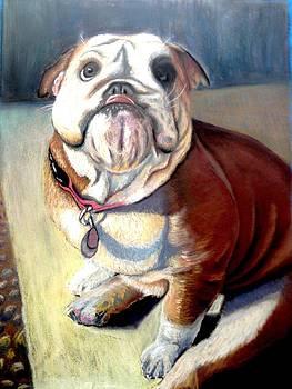 Bulldog by Gala Ilchenco