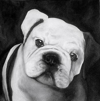Bulldog Pup by Christine Maeda
