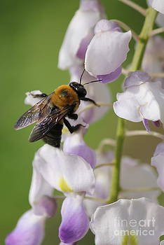 Bumble Bee by Vicki Genna