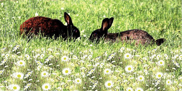 Nick Gustafson - Bunny Love