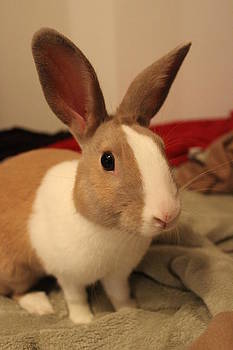 Bunny by Rob Merriam