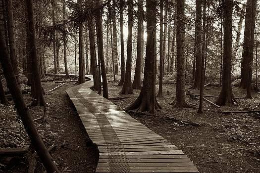 Burns Bog Boardwalk in black and white by Scott Holmes