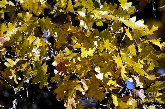 Burr Oak Tree by Juls Adams