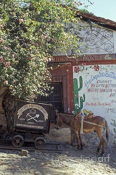 John  Mitchell - BURRO TAKING A SIESTA Copala Mexico