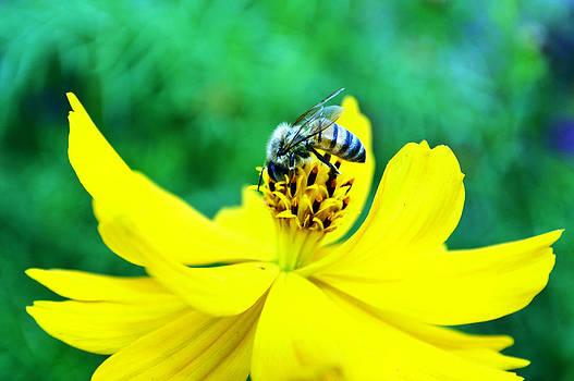 Cindy Nunn - Busy as a Bee