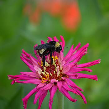 Busy Bee by Gale Cochran-Smith