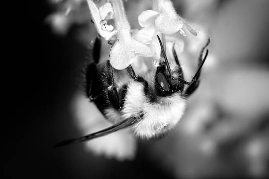 Busy Bee by Hali Sowle