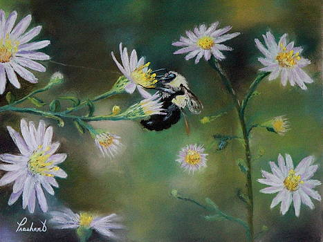 Busy Bee - Nature Scene by Prashant Shah