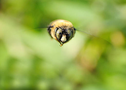 Busy Bee by Sarah Rodefeld
