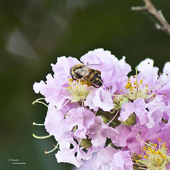 Busy Bee by Teresa Dixon