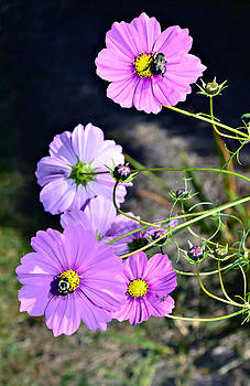Busy Bees by Susan Leggett