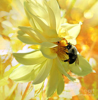 Busy Bumble Bee by Judy Palkimas