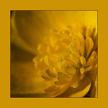 Liz  Alderdice - Buttercup Yellow