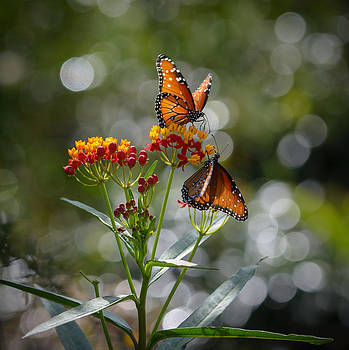 Butterflies and Bokeh by Linda Dyer Kennedy