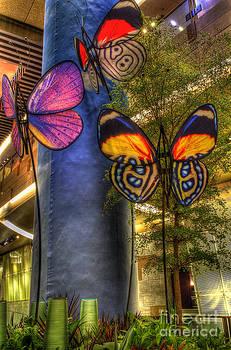 Butterflies Are Free by Matthew Hesser