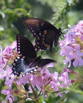 Butterflies at Shenandoah National Park by Wendy  Beatty