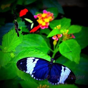Butterflies Galore by Terri K Designs