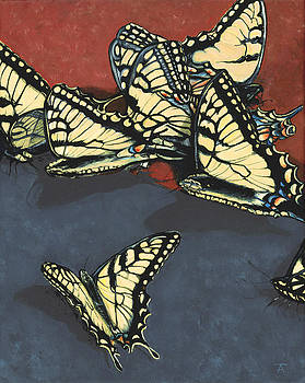 Butterflies of Nelson County by Tracy Anderson