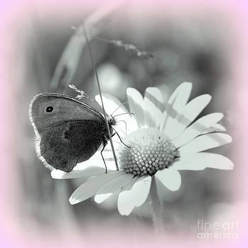 Butterfly                                                     by Vera  Laake