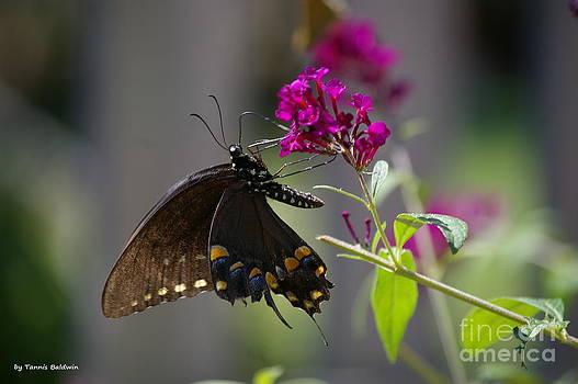 Tannis  Baldwin - Butterfly 1