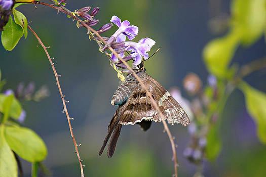 Butterfly and a Purple Bloom by Lynn Jordan