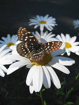 Butterfly and Shasta Daisy - My Spring Garden by Brooks Garten Hauschild