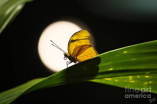 Butterfly and the Moon by Nishanth Gopinathan