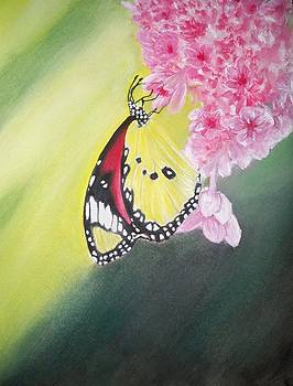 Butterfly blessings by Tammy McClung