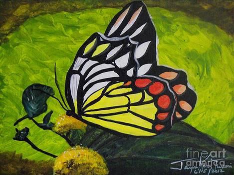 Butterfly Cove by Jayne Kerr