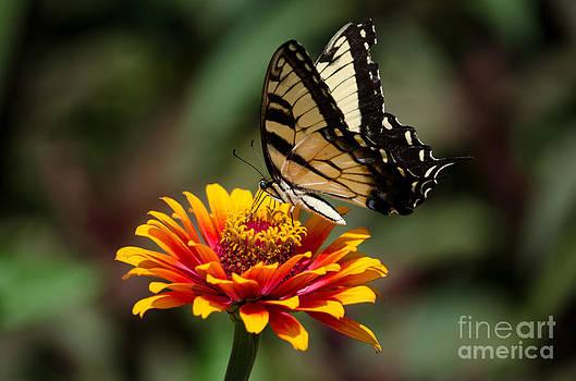 Butterfly Delight by Nancy Edwards