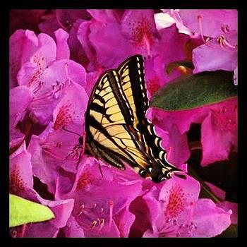 Butterfly by Devin Stone