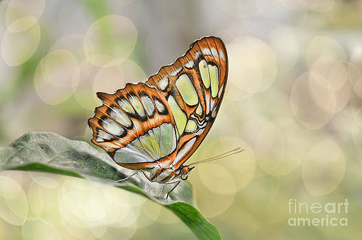 Butterfly Dream by Prairie Poetry