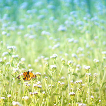 Butterfly Dreams by Holly Kempe