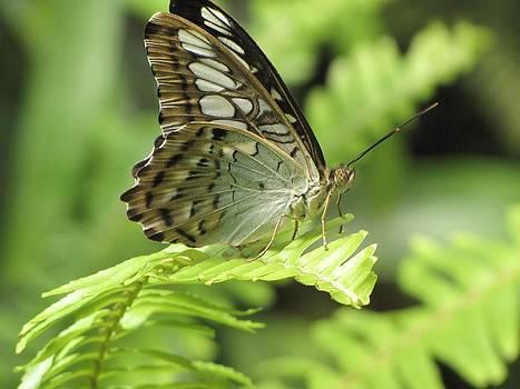 Tam Ryan - Butterfly Fantasy